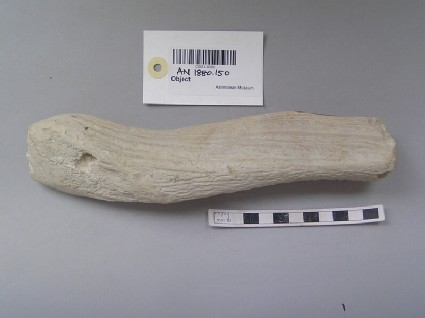 Fragment of worked antler