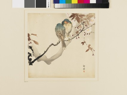 Two small birds on a blossoming branch