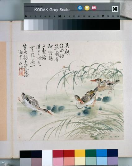 Three ducks swimming in a pool