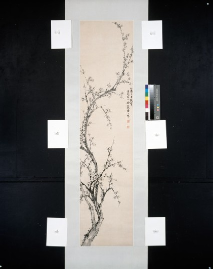 Prunus branch