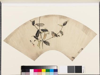 Sparrow on an akebi plant