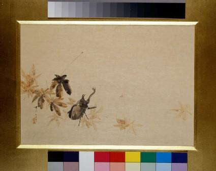 Beetle among autumn leaves