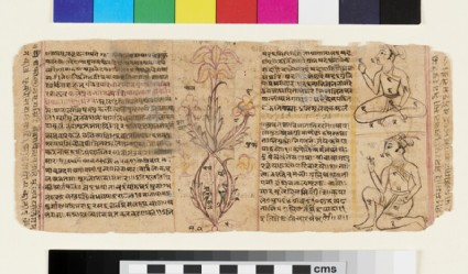 Unidentified manuscript page with numbered, line and wash illustrations of human figures and flowering plant