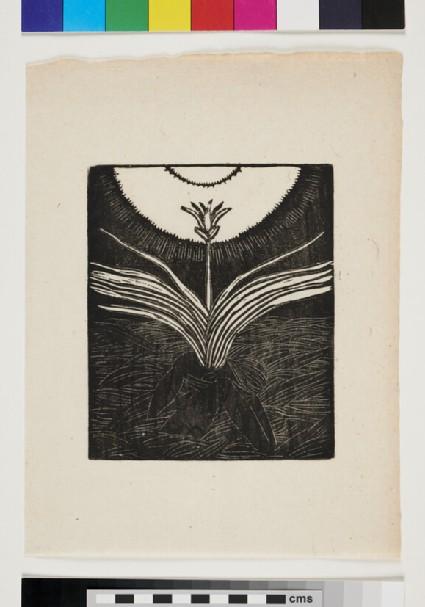 Ophiocordiceps sinensis (winter grass)