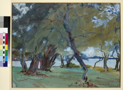 Olive Trees by Lake Garda
