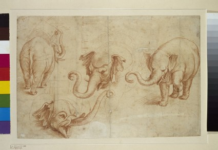 Four Studies of an Elephant