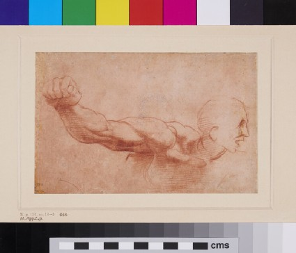 Study of a Man's Arm