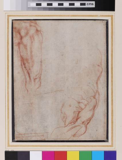 Recto: Studies of Anatomy<br />Verso: Male Torso