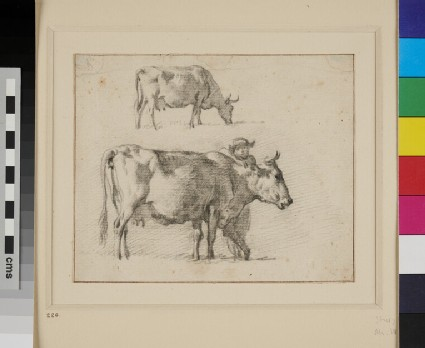 Two Studies of a Cow