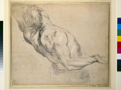 Study of a nude male torso