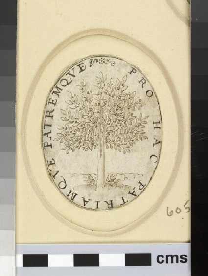An oval depicting an olive tree in fruit
