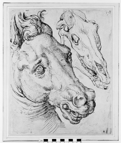 Studies of a Horse's Head and Skull