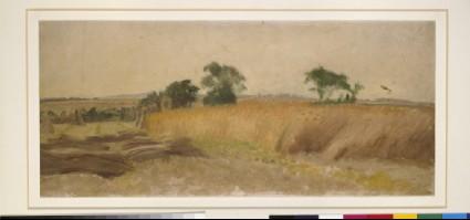 Study of a Cornfield