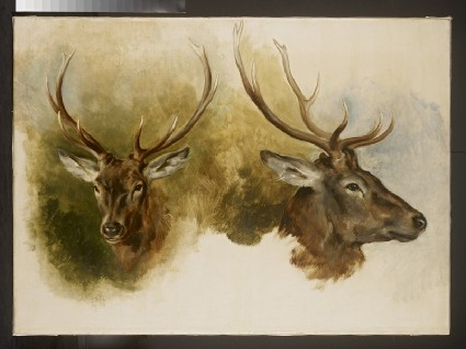 Two Studies of a Stag's Head