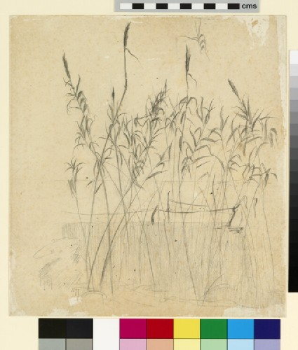 Study of grasses beside a lake, with boats moored in the middle distance