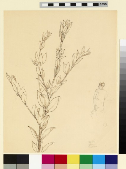Study of a branch of myrtle, and an Egyptian figure seen from behind