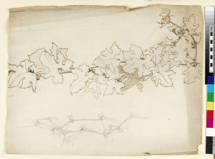 Two studies of trailing white bryony vine