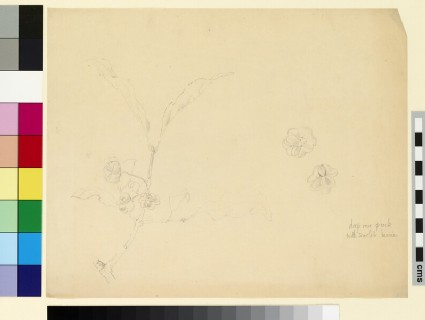 Studies of a stem of the spindle tree, with two detail studies of the seeds