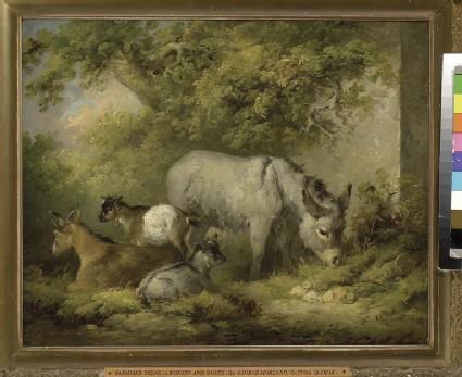 Farmyard Scene: a Donkey and Goats