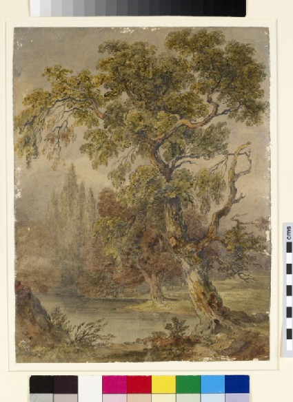 Landscape with trees and lake