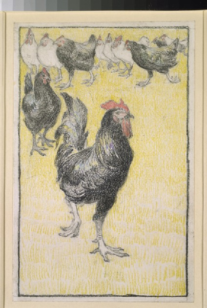 A cockerel, followed by black and white hens