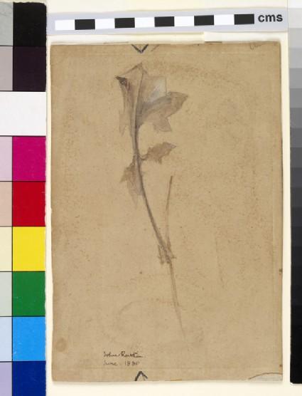 Study of ivy stalk