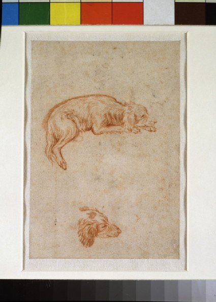 Recto: Two studies of a spaniel
