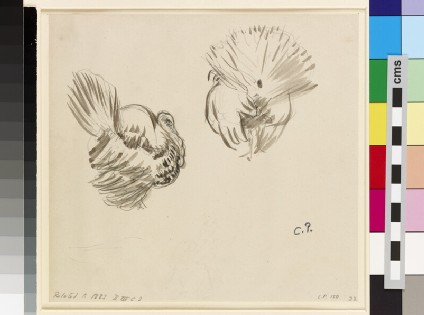 Two studies of a turkey