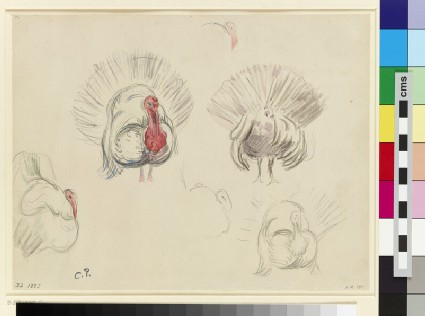 Six studies of a turkey
