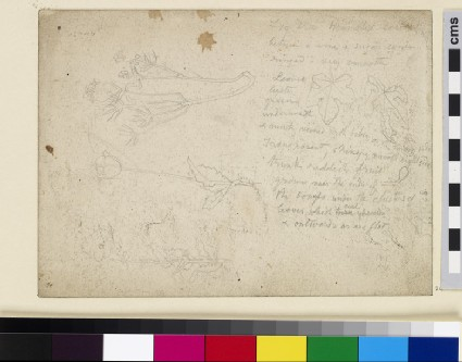 Recto: Studies of Leaves and Flowers<br />Verso: Sketch of a Gipsy Caravan