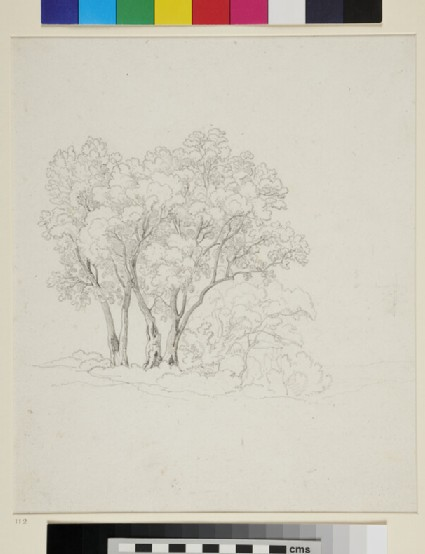 Recto: Study of Trees <br />Verso: Study of the Discobolus