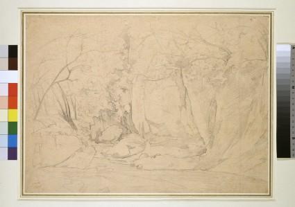 A woodland stream in a rocky gully