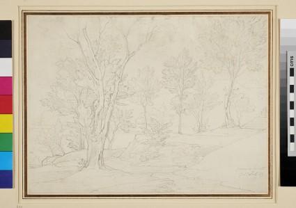 Landscape in the Piano di Sorrento