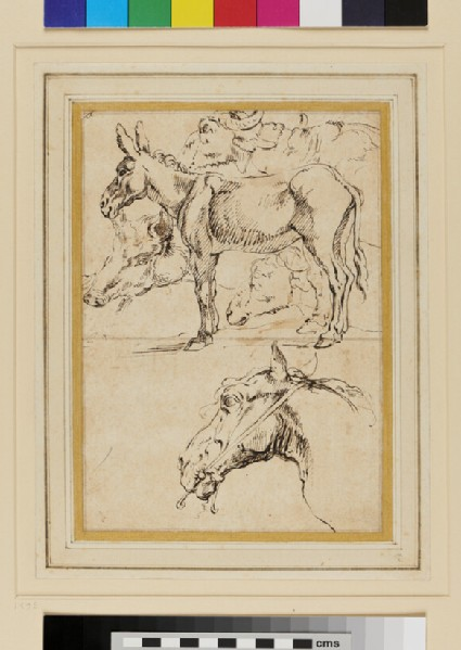 Studies of a Donkey and other Animals