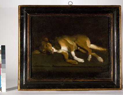 A Dog lying on a Ledge