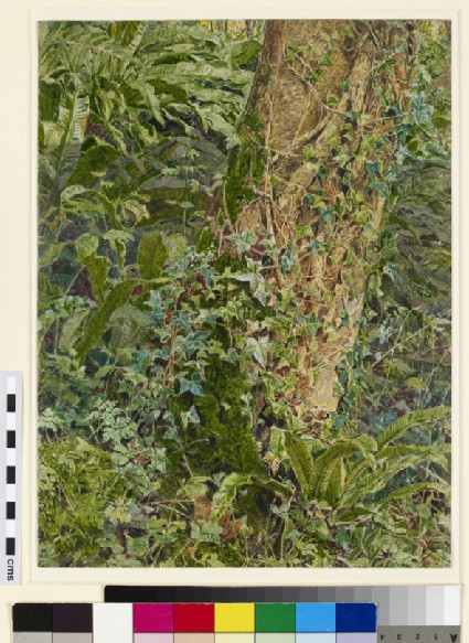Study of an Ash Trunk