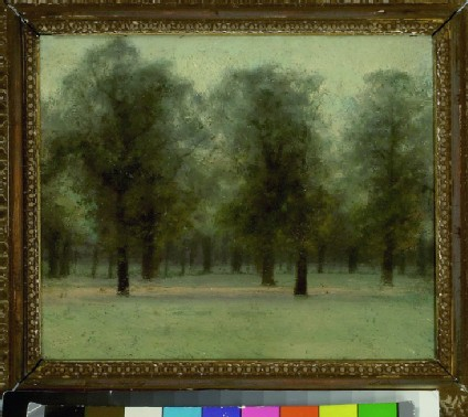 Beech Trees at Sunset, Kensington Gardens