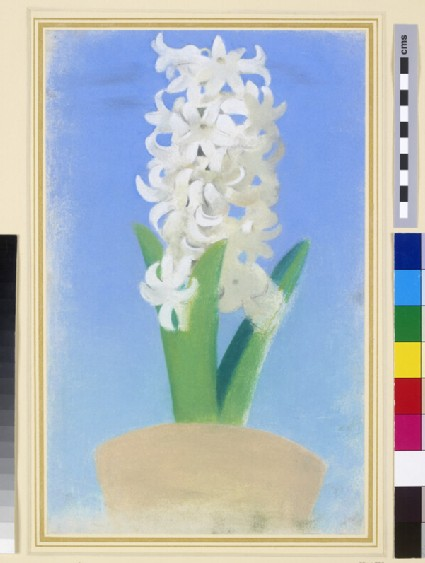 A white hyacinth in a flower-pot