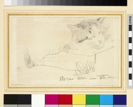 Study of a Cat, Atossa