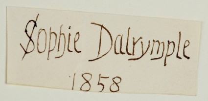 Lettering Design for Sophie Dalrymple