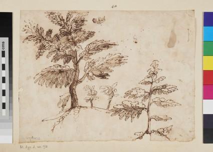 Studies of Trees