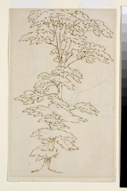Recto: Tree Study<br />Verso: Tree Study