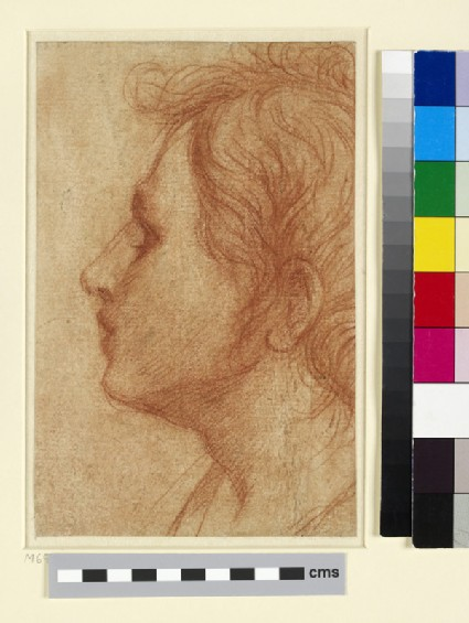 Head of a Youth in Profile