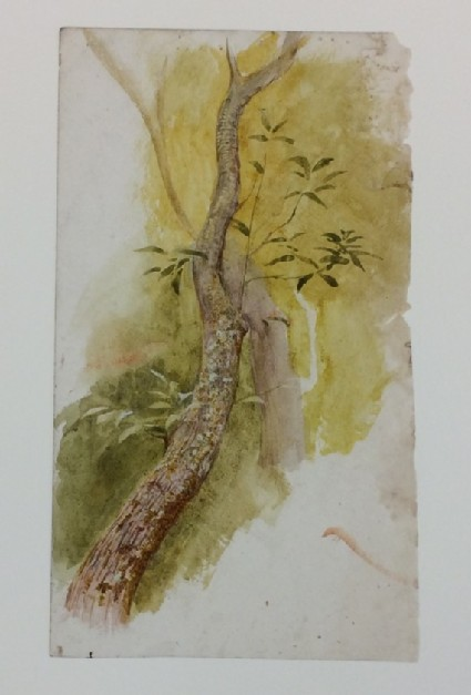 Study of the Bough of a Tree