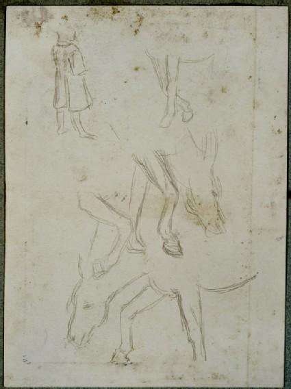 Studies of a Donkey grazing