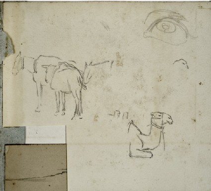 Two Mules and a Camel, with a Study of an Eye