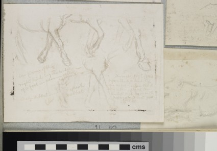 Studies of the Legs of a Donkey for 'The Triumph of the Innocents'