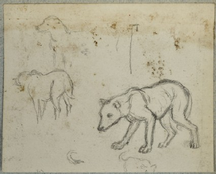 Studies of a Dog for 'The Triumph of the Innocents'