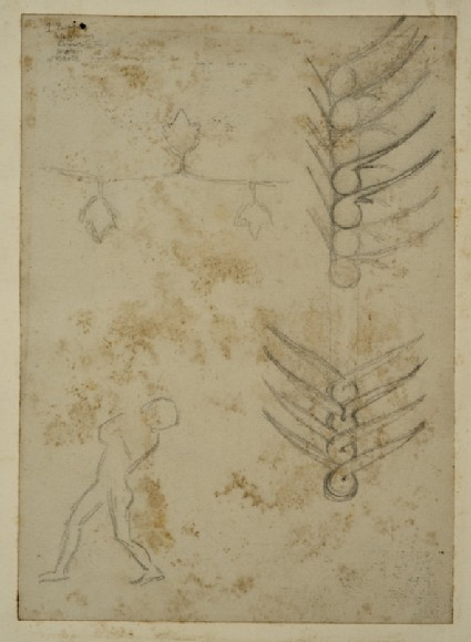 Studies of decorative Motifs based on Plants, and of a Man looking over his Shoulder