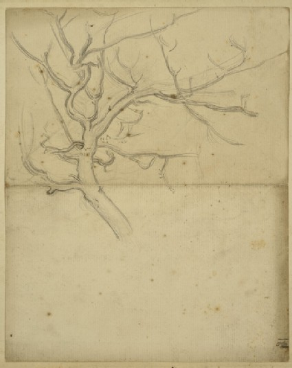Study of the Branches of a Tree, for 'On the Plains of Esdraelon'